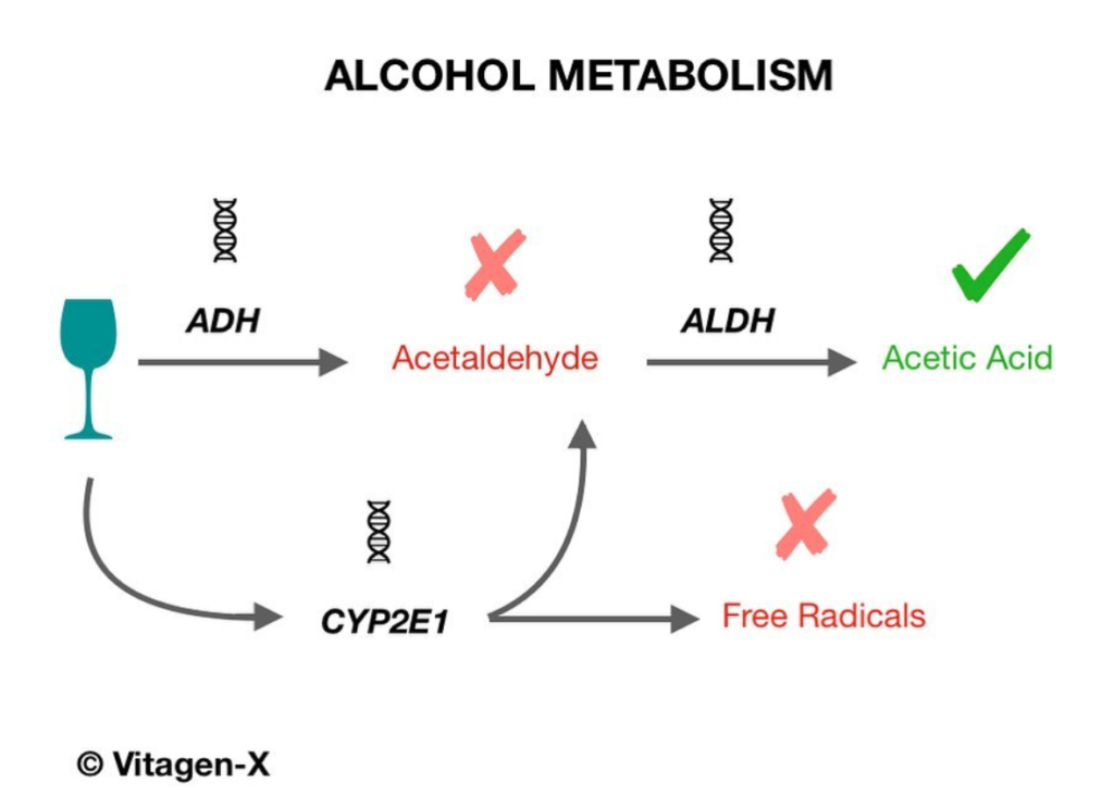 Alcohol metabolism genes