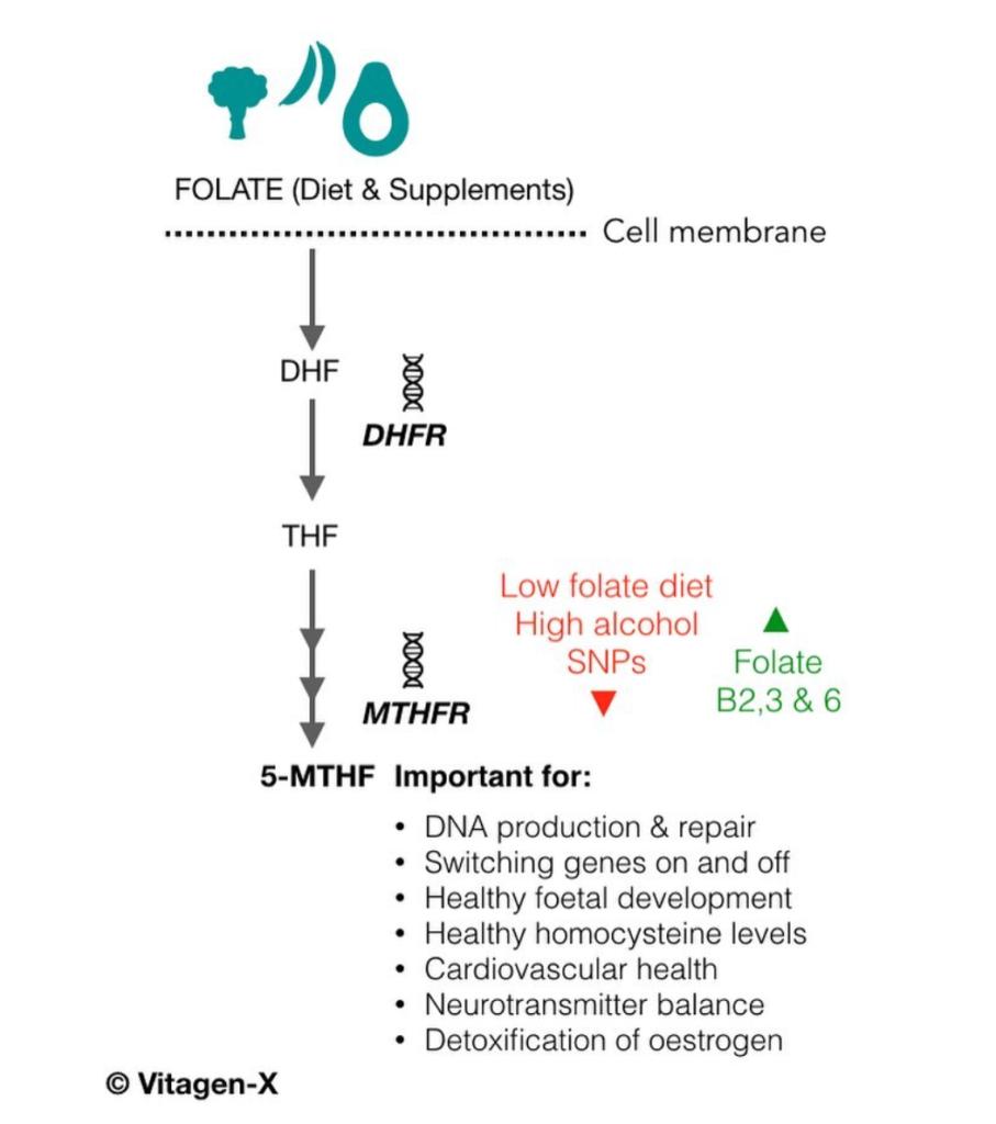 folate, vitamin b9, folic acid, genes, MTHFR